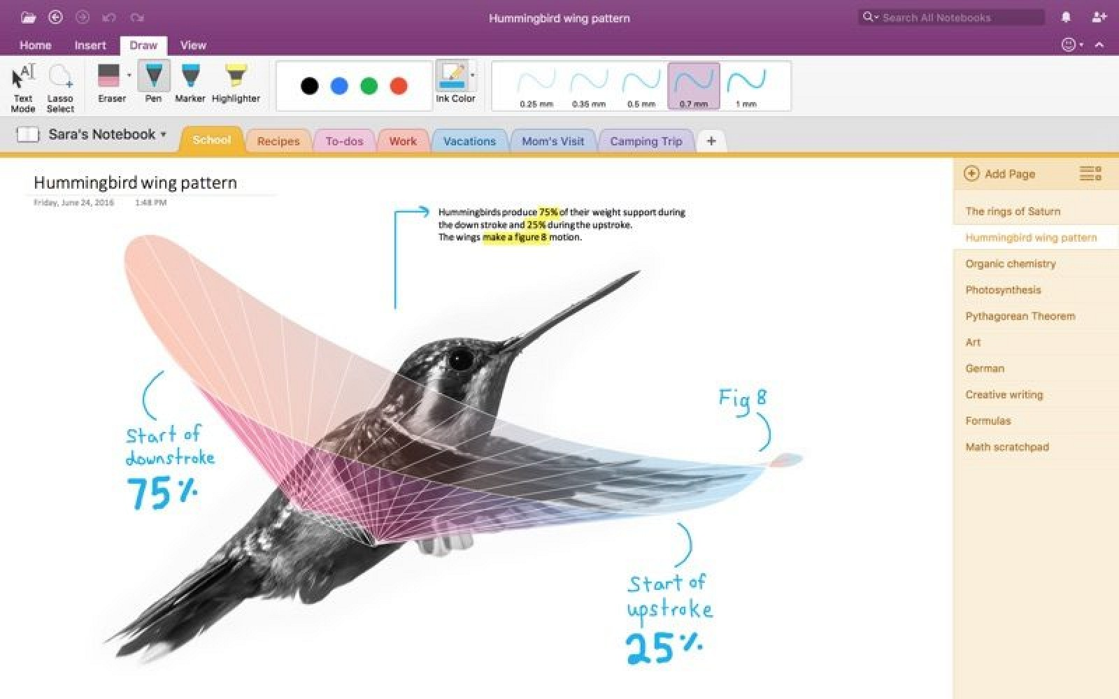 Microsoft Launches OneNote Import Tool to Help Mac Users Transition From Evernote