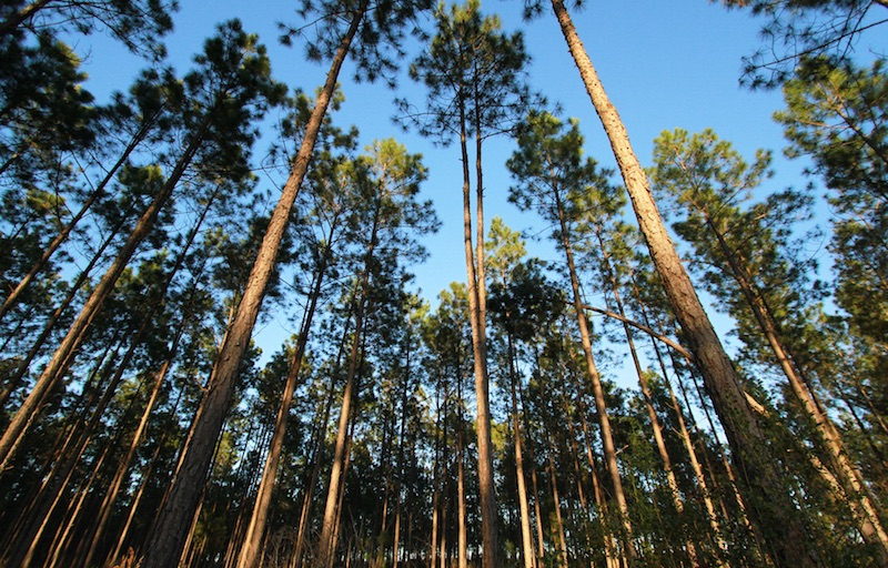 apple_conservation_fund_forest